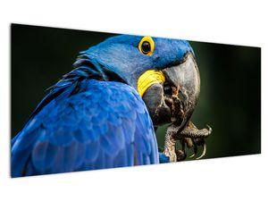 Obraz papouška (V020714V12050)