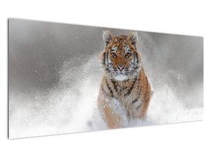 Obraz bežiaceho tigra v snehu (V020719V12050)