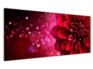 Obraz červené kvety (V020807V12050)