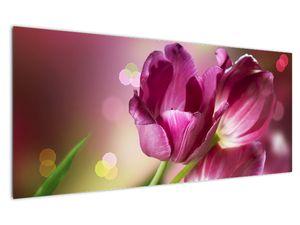 Obraz růžových tulipánů (V020887V12050)