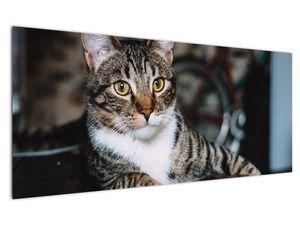Obraz kočky (V020889V12050)