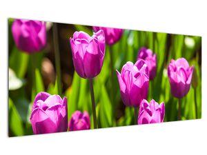 Obraz tulipánov na lúke (V020893V12050)