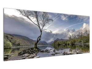 Obraz řeky se stromem (V020917V12050)
