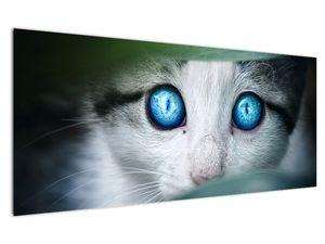 Obraz kočky (V020944V12050)
