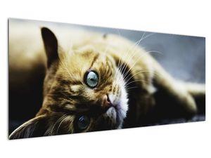 Obraz kočky (V020963V12050)