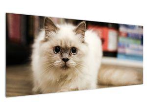 Obraz bílé kočky (V021124V12050)