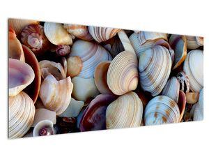 Kagyló képe (V021131V12050)