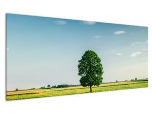 Obraz stromu na louce (V021171V12050)