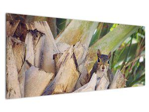 Obraz veverky na stromu (V021177V12050)