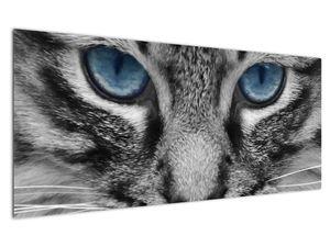 Obraz kočky (V021221V12050)