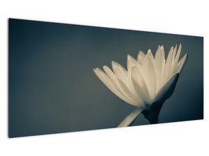 Obraz květiny (V021223V12050)