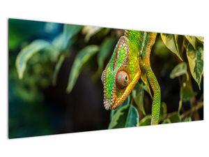 Obraz chameleona (V021236V12050)