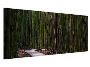 Obraz - Medzi bambusy (V021324V12050)