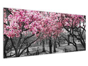 Obraz stromů Magnolíie (V021344V12050)