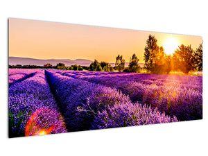 Obraz levandulového pole, Provence (V021590V12050)