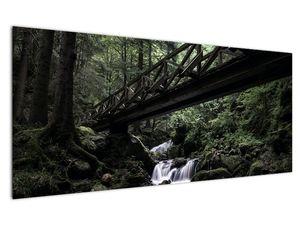 Obraz z černého lesa (V021686V12050)