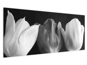 Kép - fekete-fehér tulipán virág (V021916V12050)