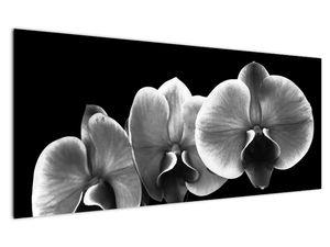 Obraz květu orchideje (V022015V12050)