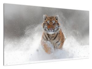 Slika tigra koji trči u snijegu (V020719V12070)