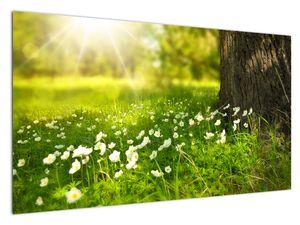 Slika proplanaka i cvijeća (V020842V12070)