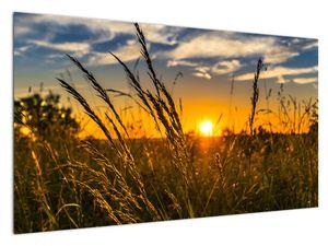 Slika polja pri zalasku sunca (V021001V12070)