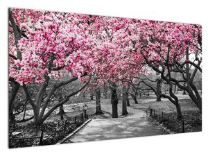 Slika drveća magnolije (V021344V12070)