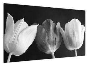 Kép - fekete-fehér tulipán virág (V021916V12070)