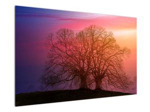 Obraz stromů v mlze (V020088V12080)