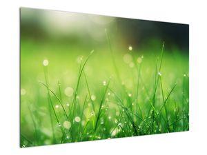 Obraz - rosa na trávě (V020169V12080)