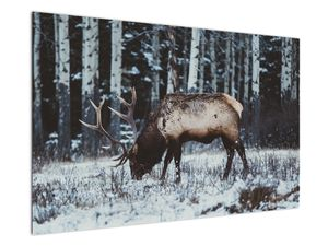 Obraz - jeleň v zime (V020179V12080)