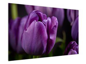 Obraz květů tulipánů (V020215V12080)