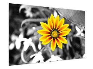 Obraz žluté květiny (V020361V12080)