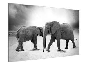 Obraz - černobílí sloni (V020398V12080)