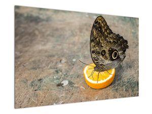 Obraz motýla (V020454V12080)