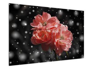 Obraz růžové květiny (V020471V12080)