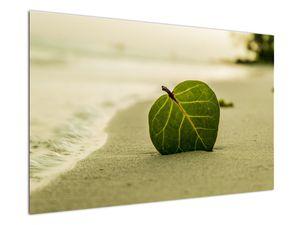 Kép egy levél a homokban (V020485V12080)