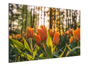 Obraz - oranžové tulipány (V020552V12080)