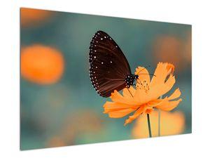 Obraz - motýl na oranžové květině (V020577V12080)