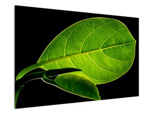 Obraz - zelený list (V020628V12080)