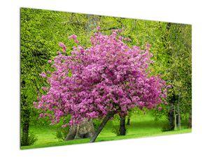 Obraz rozkvetlého stromu na louce (V020654V12080)