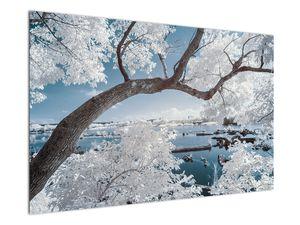 Obraz zasněženého stromu u vody (V020718V12080)
