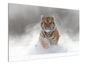 Obraz bežiaceho tigra v snehu (V020719V12080)