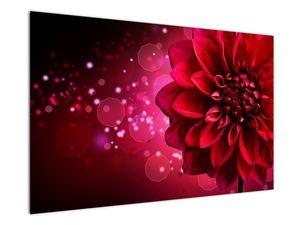 Obraz červené kvety (V020807V12080)