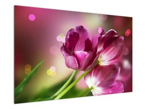 Obraz růžových tulipánů (V020887V12080)