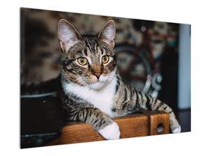 Obraz kočky (V020889V12080)