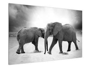 Obraz slonů (V020900V12080)