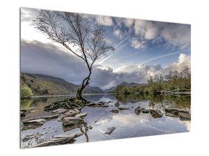 Obraz řeky se stromem (V020917V12080)