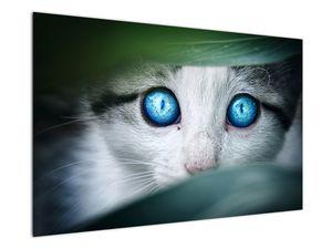 Obraz kočky (V020944V12080)