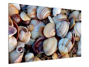 Kagyló képe (V021131V12080)