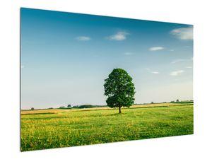 Obraz stromu na louce (V021171V12080)